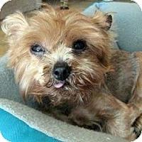 Adopt A Pet :: Levi - Leesburg, FL