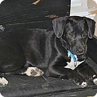 Adopt A Pet :: Deezy - Wakefield, RI