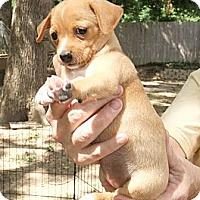 Adopt A Pet :: Sunshine - Plano, TX