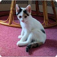 Adopt A Pet :: Solty - Colmar, PA