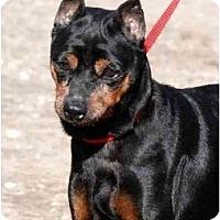 Adopt A Pet :: Whitney - Minneapolis, MN