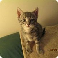 Adopt A Pet :: Jackson - Island Park, NY