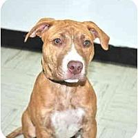 Adopt A Pet :: Carly - Port Washington, NY