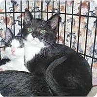 Adopt A Pet :: Whoopi - Colmar, PA