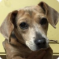 Adopt A Pet :: Columbia - Orlando, FL