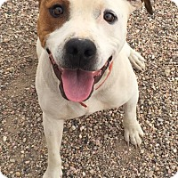 Adopt A Pet :: Clyde - Cedar City, UT