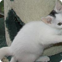 Adopt A Pet :: DING DONG - Acme, PA