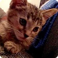 Adopt A Pet :: Sabrina - Redondo Beach, CA
