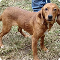 Adopt A Pet :: Brie - Dumfries, VA