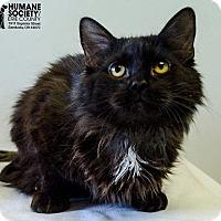 Adopt A Pet :: CHARMER - Sandusky, OH
