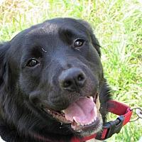Adopt A Pet :: Baylee - Enfield, CT