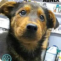Adopt A Pet :: Abner - Kimberton, PA