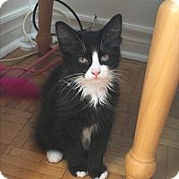 Adopt A Pet :: Cash - Toronto, ON