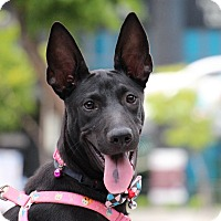 Adopt A Pet :: Keely - San Francisco, CA