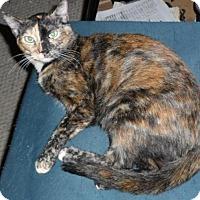Adopt A Pet :: Cinderella - Pensacola, FL