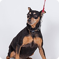 Adopt A Pet :: Pinnochio - Jupiter, FL