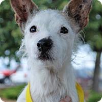 Adopt A Pet :: Gertrude - Hayden, ID