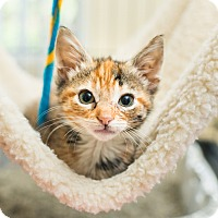 Adopt A Pet :: Firefox - Los Angeles, CA