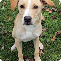 Adopt A Pet :: Daniel - Harrison, NY