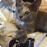 Adopt A Pet :: Gemma - Caro, MI