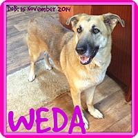 German Shepherd Dog Dog for adoption in New Brunswick, New Brunswick - WEDA