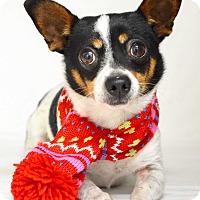 Adopt A Pet :: Roger - Dublin, CA