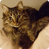 Adopt A Pet :: Hannah - Troy, MI