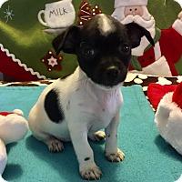 Adopt A Pet :: Monroe (BH) - Santa Ana, CA