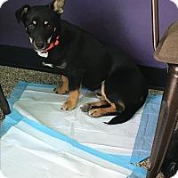Adopt A Pet :: Puck - Thousand Oaks, CA