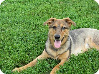 Where Can I Adopt A German Shepherd Dog In Ohio