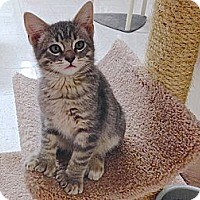 Adopt A Pet :: Dash, Pipsqueak, Kevin - Foothill Ranch, CA