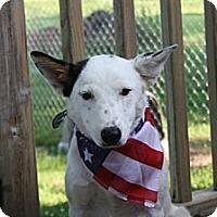 Adopt A Pet :: Ryleigh - Marietta, GA