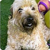 Adopt A Pet :: Viola - Mission Viejo, CA