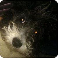 Adopt A Pet :: Somerton - Phoenix, AZ