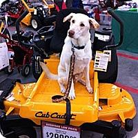 Adopt A Pet :: Buckley - New Bern, NC
