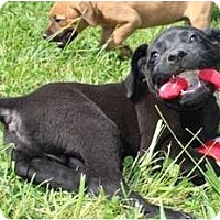 Adopt A Pet :: Leapy - Hagerstown, MD