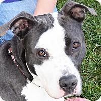 Adopt A Pet :: Nellie - Huntley, IL