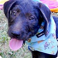 Adopt A Pet :: Stoger big boy - Sacramento, CA