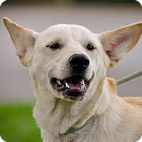 Adopt A Pet :: Kasey - Gainesville, FL