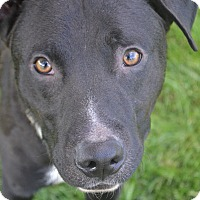Adopt A Pet :: Marshall - Toledo, OH