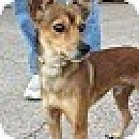Fox Terrier (Smooth) Mix Dog for adoption in Houston, Texas - Bernard