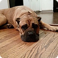 Adopt A Pet :: Xena**Med Hold** - Virginia Beach, VA