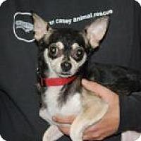 Adopt A Pet :: Flippy - Brooklyn, NY
