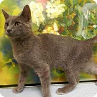 Adopt A Pet :: Smokey - Tyler, TX