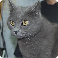 Adopt A Pet :: Whiskers - Brooklyn, NY