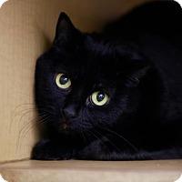 Adopt A Pet :: Freddie - Kettering, OH