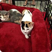 Adopt A Pet :: Jellybean - Simpsonville, SC