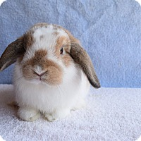 Adopt A Pet :: Bumble Bee - Fountain Valley, CA