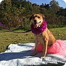 Adopt A Pet :: Sydney