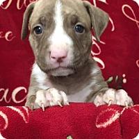 Adopt A Pet :: Yoda - San Diego, CA